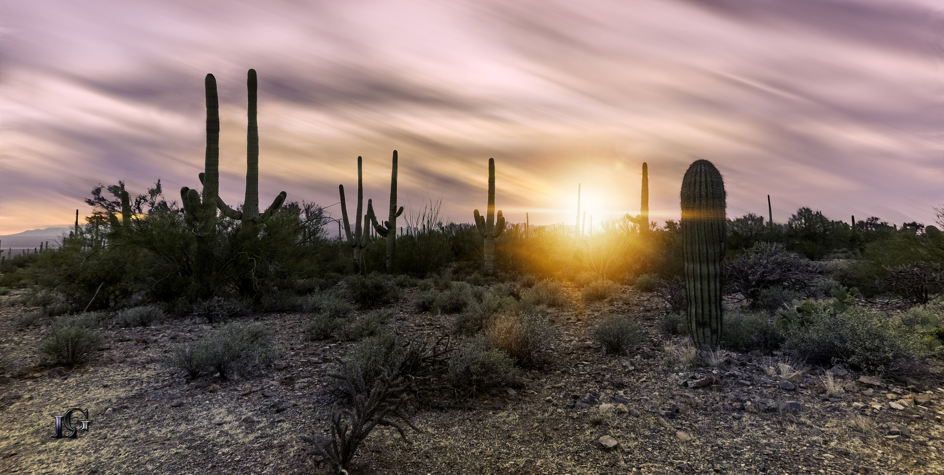 Arizona landscape with cactus