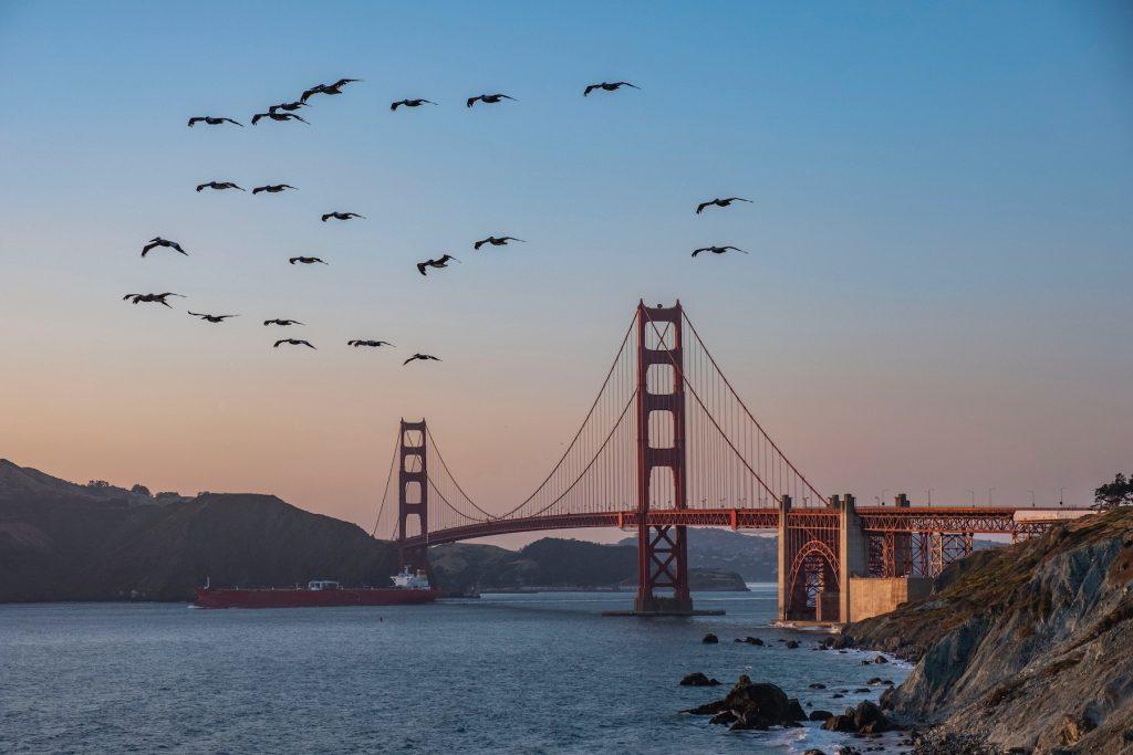 birds flying over San Francisco bay