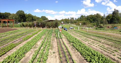 Duke Campus Farm
