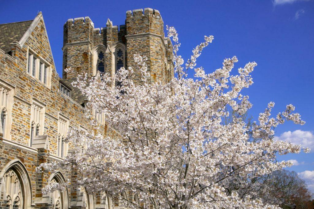 Duke at Spring